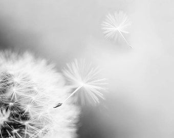 black and white photography dandelion decor dandelion wall art 8x10 11x14 art photography floral art nursery decor black  white art print