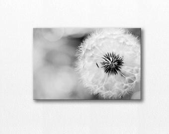 dandelion canvas art dandelion wall art 12x12 20x30 fine art photography canvas art black white canvas print photography nature canvas wrap