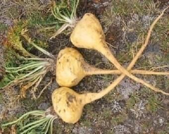 15 Maca Root Seeds-1071