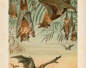 INSTANT DOWNLOAD Fruit Bats Halloween Decor 600 dpi 6x9 to 12x18 inch Clip Art  Image jpeg
