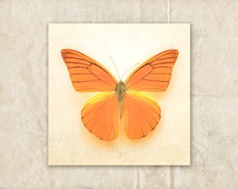 Butterfly Photograph, Orange Wall Art, Moth Photography, 4x4 Photo, Butterfly Wall Decor, Baby Girl Nursery Decor