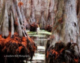 Swamp Photograph Print Water Photography Red Moss 8x10 Trees Fall Trees Swamp Lake Photo Water Red Tree Louisiana Bayous 3