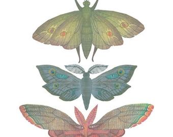 Saturn Moths- A4 art print