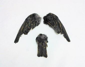 "5"" Starling wings and tail Taxidermy bird avian pair feathers feather sets WING02"