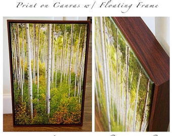 "20"" x 30"" Print on Canvas, Aspen Trees, Aspens, Colorado Aspen Trees, Print on Canvas, Fine Art Print - ""Warm Weather Aspens"""