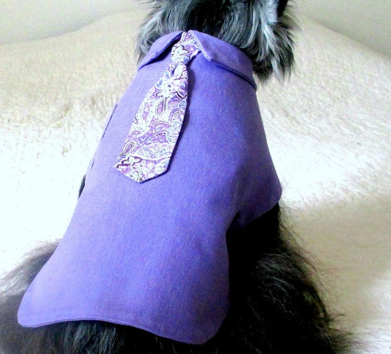 """Small Dog's """"Executive"""" Lavender Dress Shirt & Paisley Tie Made to Order Stretch Cotton Yorkie"""