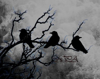 Crow Birds Raven on Branch Stormy Sky Home Decor Wall Art Matted Picture A526