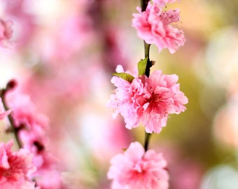 Pretty Pink Flowers Photo Print - Nature Photography - Size 8x10, 5x7, or 4x6