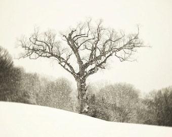 Tree Photograph, Black and white, Winter snow landscape, George Washington