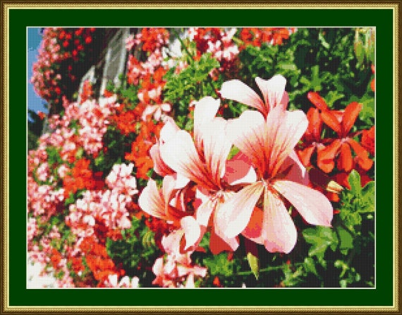 Beautiful Geraniums Cross Stitch Pattern /Digital PDF Files /Instant downloadable