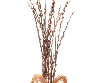 Fresh pussy willow branches, 30 inch stems, 15 stems; Natural pussy willow stems; Fast shippping