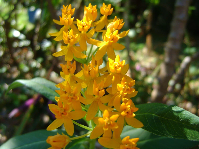 5 Butterfly Garden Flower Plants