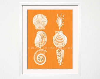 Seashell Wall Art, Seashell Print, Palm Beach Chic Decor, Beach House Wall Art, Orange Wall Art, Kitchen Wall Art, Orange Decor, Orange Art