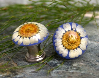 Knobs, Glass Knobs, Cabinet Knobs, Clear resin with preserved Daisy- Flower, Garden