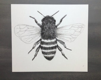 Original Bee Drawing-Charcoal and Ink-Choose your size