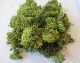 Spring Green Reindeer Moss, Terrariums, Fairy Gardens, Craft Projects, 4 oz