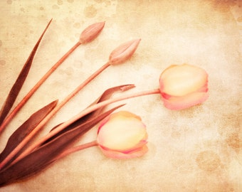Fine Art Photography Print, Vintage Flower Shabby Chic Oversized Wall Decor Print- Distressed Tulips Print