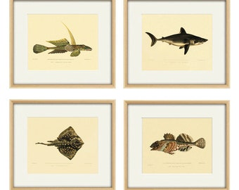 Antique fish art print set antique prints Nautical art print Ocean decor sea art print fish wall art Wall poster art beach art print