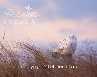 Snowy Owl nature photography notecards 4x5