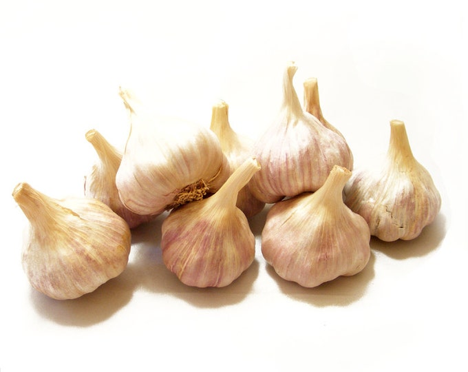 German Red Garlic Bulbs Organic Grown Gourmet - Half Pound For Planting or Cooking Cold Hardy Variety Fall Shipping