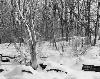 Print, Landscape, Winter River, Ontario, Canada 1987