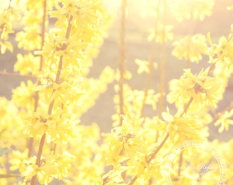 Sunshine - Floral Photography, Shabby Chic, Yellow, Cottage Chic, Nursery Art, Wall Art, Home Decor, Dreamy, Prints and Canvas Available