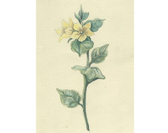 Yellow Spring Flower Drawing