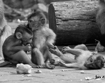 Indonesia - Gili Air - Baby Monkeys - Fine Art Photography Modern Wall Art in Various Sizes 8x10, 8x12, 11x14, 12x18, 16x20, 16x24