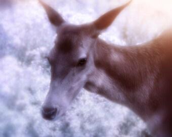 Nature Photography, Deer, Frosty, Winter, Home Decor, Art print.