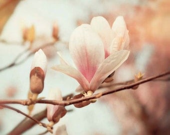 Nature photography, Magnolia, Spring, Flowers,Trees, Branches, Pink, Wall Decor