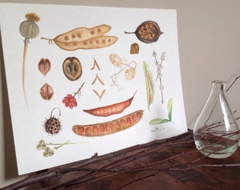 Various Seed Pods // watercolor painting