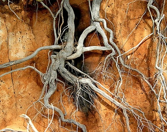 Exposed tree roots on the cliff at Canaipa Passage. Original photograph taken whilst sailing the area.