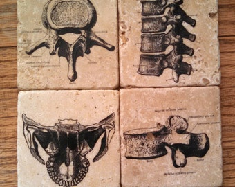 Spine and Jaw Marble Tile Coasters - Set of 4