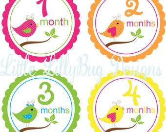 Baby Month Stickers Baby Monthly Stickers Girl Monthly Shirt Stickers Bird Multi Baby Shower Gift Photo Prop Baby Milestone Sticker