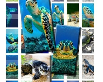 Turtle Tortoise Sea Ocean Reptile Wild Animal Shell Digital Images Collage Sheet 1x2 inch Rectangles Domino Commercial INSTANT Download RD45