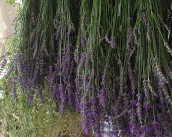 Organic Homegrown Dried Lavender