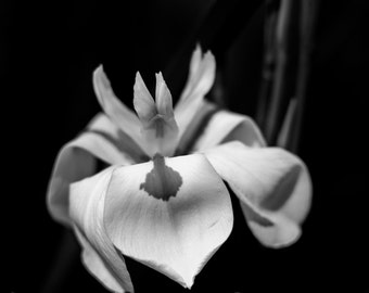 White Flower, Black and White Photography, Flower Photography, Spring Flowers, Nature Photgraphy