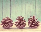 Fall Seasonal Photography, Autumn- Three Pinecones, Rustic, Fine Art, Wood, Cool, Blue, Teal - KHowellPhotography