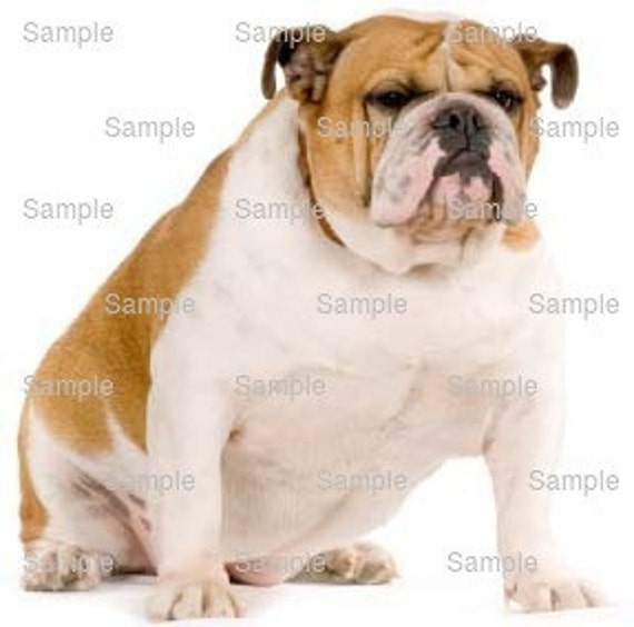 Bulldog Dog Birthday - Edible Cake and Cupcake Topper For Birthday's and Parties! - D6618