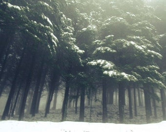Forest with snow. Photo Print.