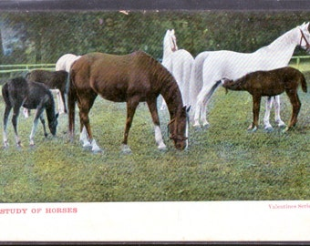 "Antique / Vintage HORSE Postcard. ""Study of Horses""."