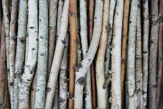 Items similar to white birch branches wood logs