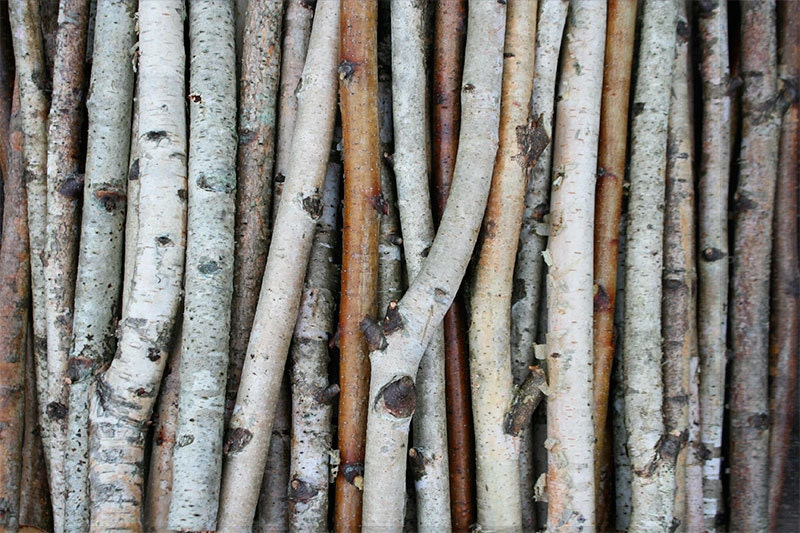 White birch branches wood logs paper sticks