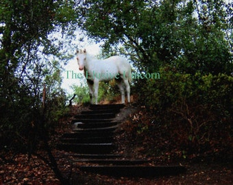 Follow your path .... 8 x10 Unicorn print photograph altered art nature trail trees shadow