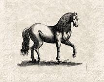 Horse Vintage Illustration Horse Download Digital Art - Vintage Horse Clipart Graphic Printable Transfer Craft Scrapbook INSTANT DOWNLOAD