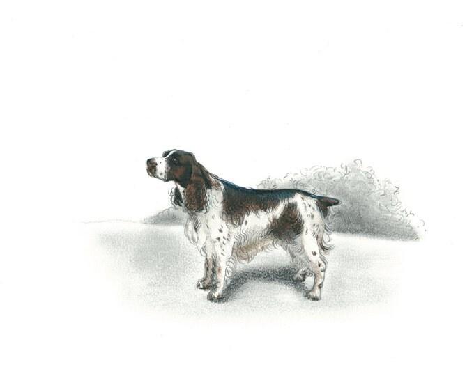English Springer Spaniel Dog Art Vintage Style Print