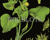vintage reproduction poster - educational science chart poster - flowering plants botanical chart