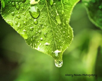 A Drop of Green, Water Droplet Photography, Leaf Photography, Nature Photography, Rain Photography, rain, leaves, green