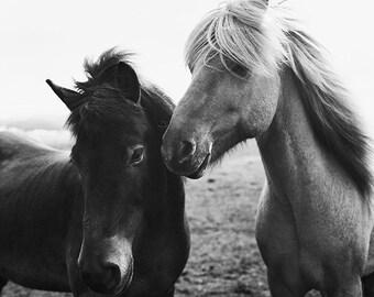 Icelandic Horses | Iceland Print | Fine Art Photography