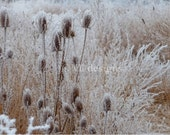 Digital Download Foggy Frosty Field 3 Digital Photography Photo Background Digital Background - SoulFILLedExpression